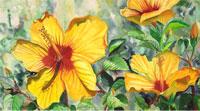 hibiscus_small